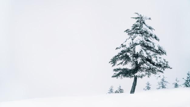 Śnieg i drzewo