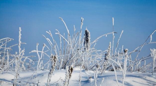 Śnieg i lód pokryły martwą trawę w sezonie zimowym, błękitne niebo i słoneczna pogoda, piękna przyroda i specyficzne cechy zimowej pogody na wolności