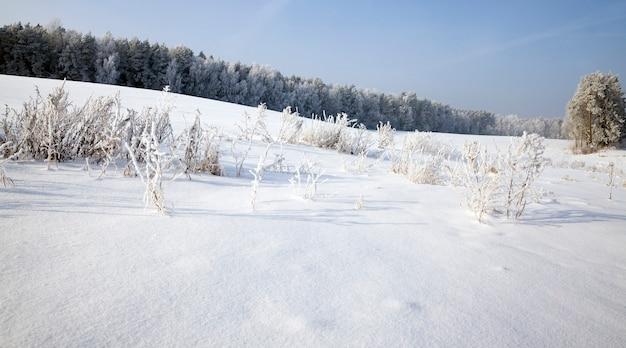 Śnieg i lód pokryły martwą trawę w sezonie zimowym, piękna przyroda i specyficzne cechy zimowej pogody na dzikim, błękitnym niebie i słonecznej pogodzie