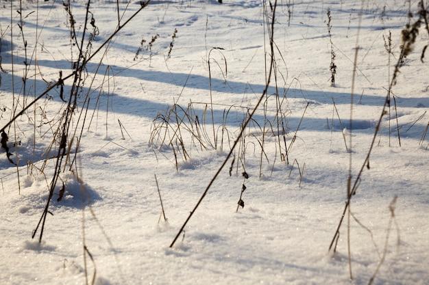 Śnieg i lód pokryte zimą martwą trawą, piękna przyroda i specyficzne cechy zimowej pogody na wolności