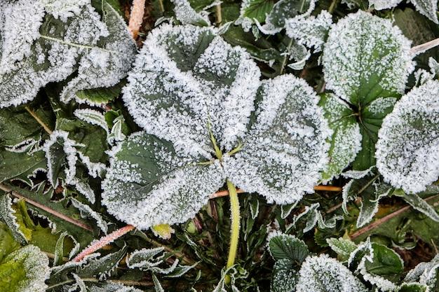 Śnieg i mróz na jesiennych liściach. koncepcja zimy