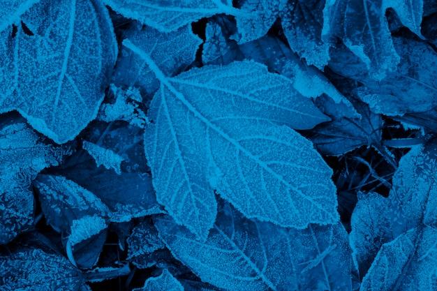 Śnieg i mróz na jesiennych liściach. modny niebieski kolor.