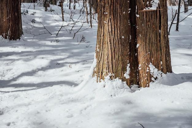 Śnieg las na togakushi sanktuarium w japonii