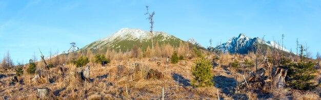 Śnieg na skalistym zboczu góry i małe jodły na wzgórzu z przodu.