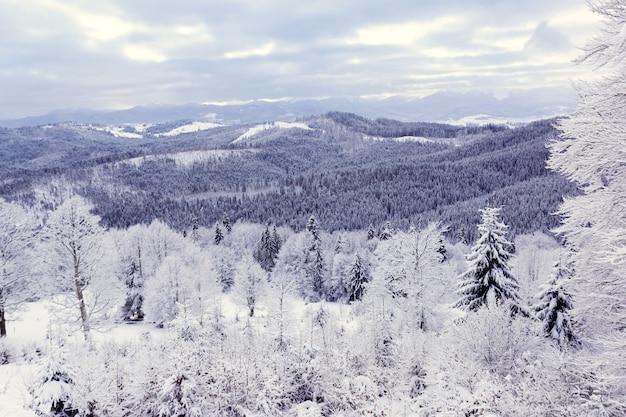 Śnieg pokryty lasem w górach