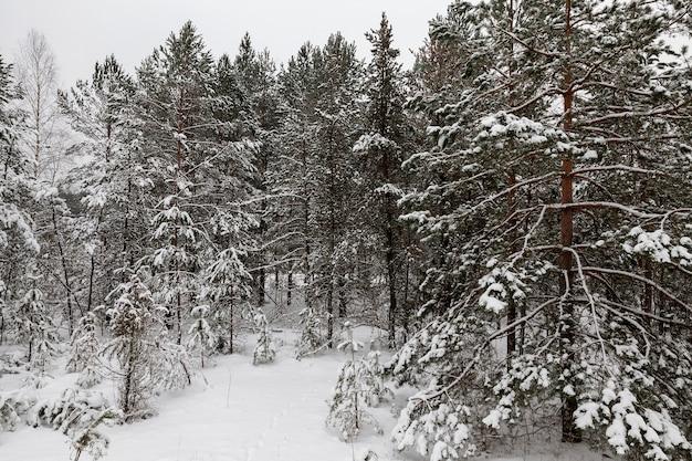 Śnieg Sfotografowany W Sezonie Zimowym, Który Pojawił Się Po Opadach śniegu. Zbliżenie, Premium Zdjęcia