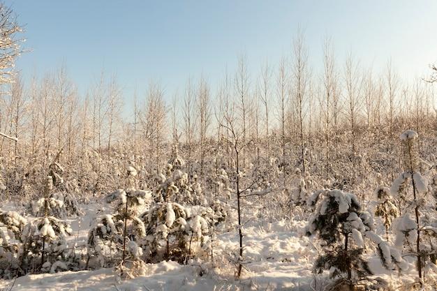 Śnieg w krajobrazie lasu