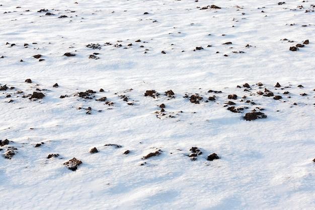 Śnieg w sezonie zimowym, który pojawił się po opadach śniegu.