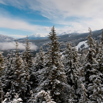 Śnieg zakrywał drzewa z górami w tle, whistler, kolumbiowie brytyjska, kanada