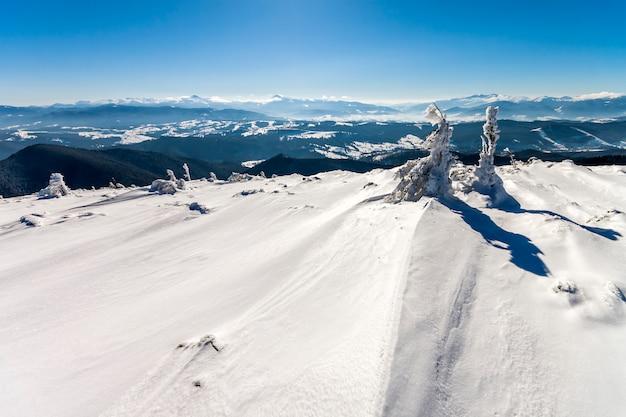 Śnieg zakrywał wygiętą małą sosnę w zim górach. arktyczny krajobraz. kolorowa scena plenerowa, przetworzone zdjęcie w stylu artystycznym.