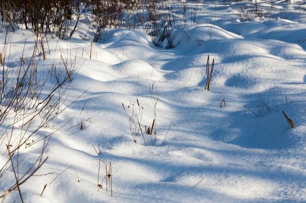 Śnieg zimą mroźny i zimny, przyroda po opadach śniegu i śnieżycach, głębokie zaspy miękkiego śniegu zimą