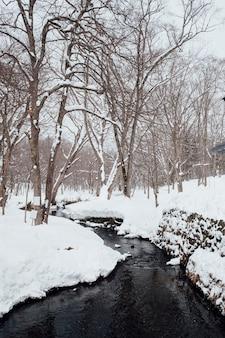 Śniegowa scena leśna w świątyni togakushi w japonii