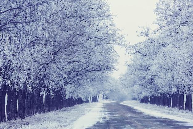 Śnieżna aleja zimą