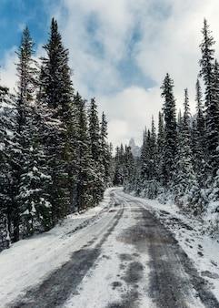 Śnieżna droga w sosnowym lesie z niebieskim niebem w yoho parku narodowym