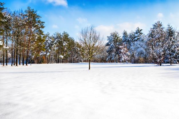 Śnieżna ścieżka do kilku drzew w lesie