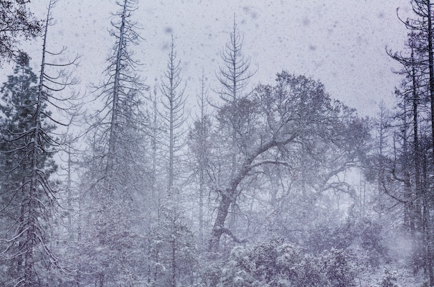 Śnieżna zamieć w lesie