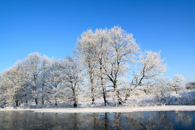 Śnieżne drzewo na wybrzeżu rzeki
