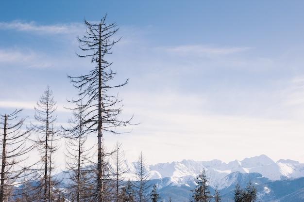 Śnieżne góry w ładnym słonecznym dniu. kaukaz, georgia. widok z ośrodka narciarskiego gudauri.