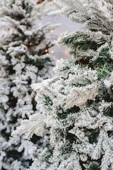 Śnieżne świerkowe gałęzie ze sztucznym śniegiem do dekoracji domu w zimie.