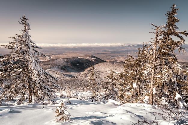 Śnieżny krajobraz leśny