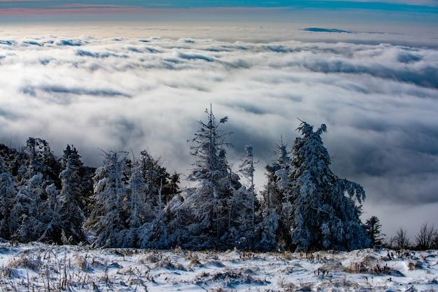 Śnieżny krajobraz śnieg góry zima w lesie