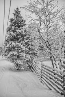 Śnieżny krajobraz z drzewami i płotami