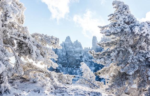 Śnieżny krajobraz. zimowy krajobraz na szczycie góry. drzewa w śniegu. szczyt górski, błękitne niebo, przyroda, zimowe słońce. mountain ai-petri. krym