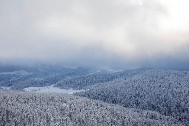 Śnieżny las krajobraz