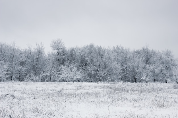 Śnieżny las. ośnieżone drzewa. gęsty las pod śniegiem.