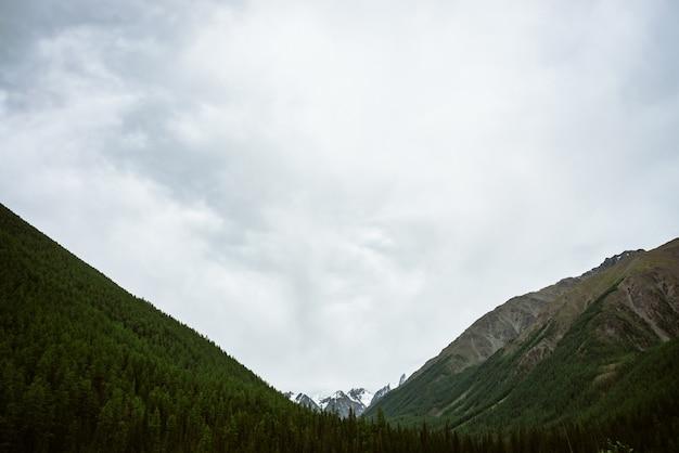 Śnieżny szczyt góry między dużymi górami pod chmurzącym niebem. skalista grań w pochmurnej pogodzie nad lasem. gigantyczne lodowce. klimatyczny, minimalistyczny krajobraz o majestatycznej naturze.