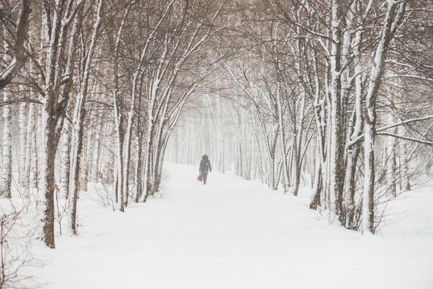 Śnieżny tunel wśród gałąź w parku