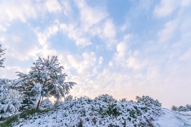 Śnieżny zimowy krajobraz. madryt. hiszpania.