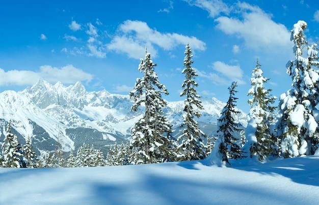 Śnieżny zimowy las jodłowy i widok na masyw górski dachstein ze szczytu papageno bahn filzmoos