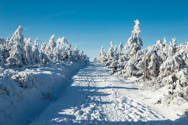 Śnieżyści drzewa w lesie z śnieżną drogą