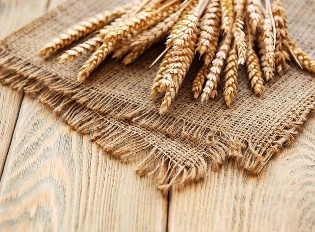 Snop kłosy pszenicy
