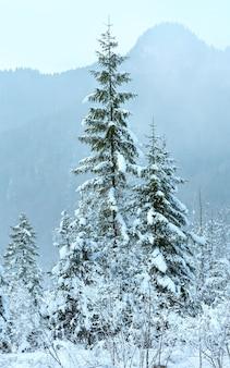 Snowy jodły u podnóża góry. pochmurny dzień mglisty.