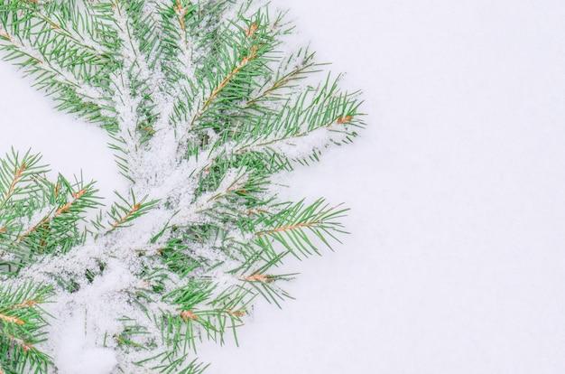 Snowy matowy wianek bożonarodzeniowy. wieniec jodłowych gałęzi.