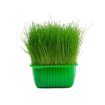 Soczysta młoda zielona trawa odizolowywająca na bielu