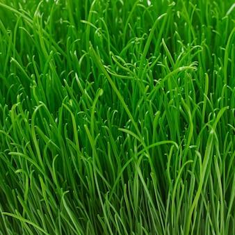 Soczysta młoda zielonej trawy tekstura