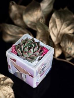 Soczysta roślina w fioletowej ceramicznej doniczce i złotych liściach jako dekoracja na czarnym akrylu