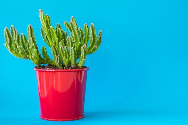 Soczysta roślina w glinianym garnku