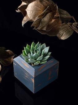 Soczysta roślina w niebieskiej drewnianej doniczce i złotych liściach jako dekoracja na czarnym akrylu