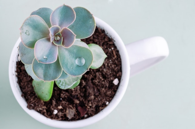 Soczysta roślina z kroplą wody. skopiuj miejsce.