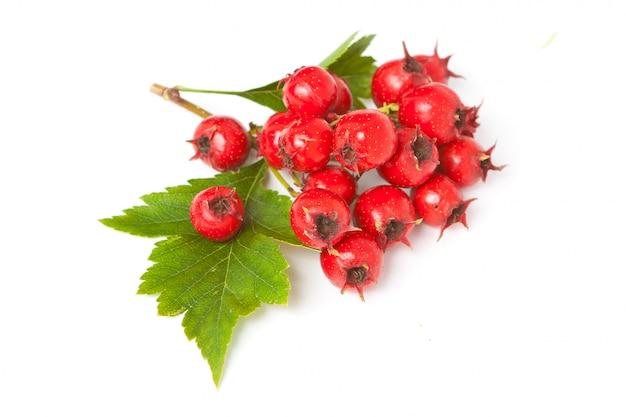 Soczyste jagody głogu z liśćmi