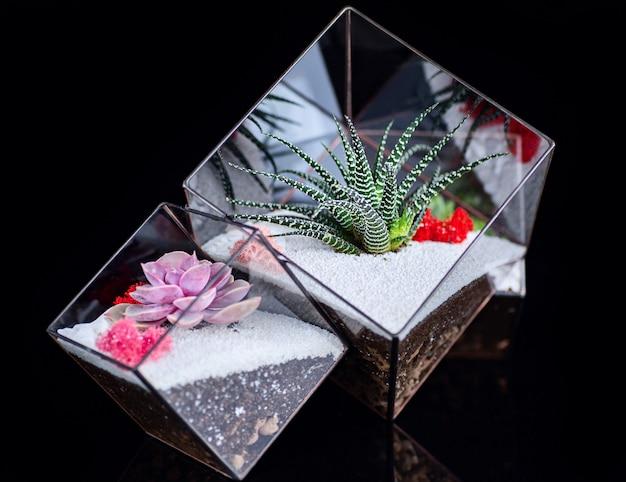 Soczyste rośliny w szklanym pudełku