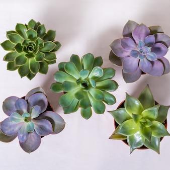 Soczyste rośliny z góry