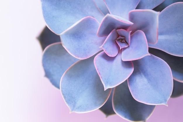 Soczysty fioletowy perl