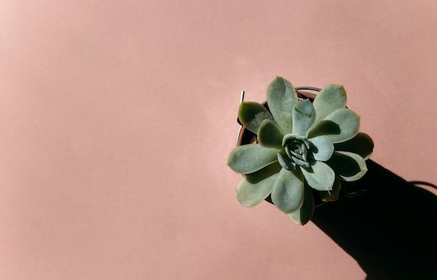 Soczysty na tle koncepcja przytulnego domowego kwiatu