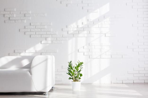 Sofa i zielona roślina. wnętrze pokoju
