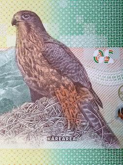 Sokół nowozelandzki portret z dolara nowozelandzkiego